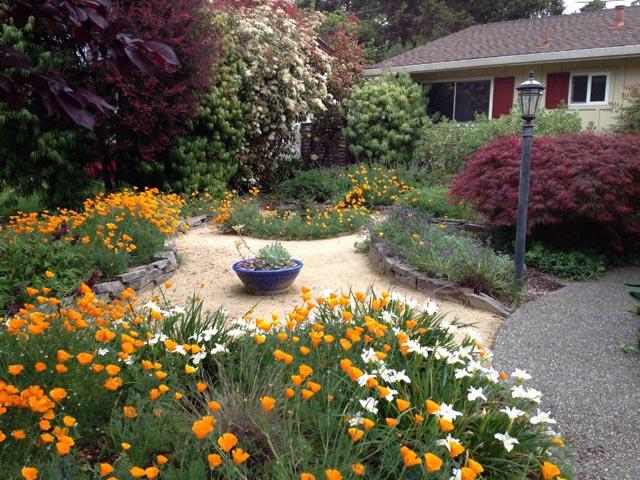 poppy-garden1634